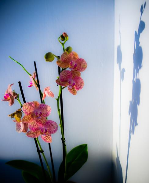 Kukka nurkassa-1728.jpg