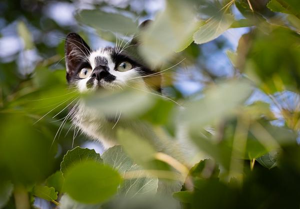 Cat in a tree-4742.jpg